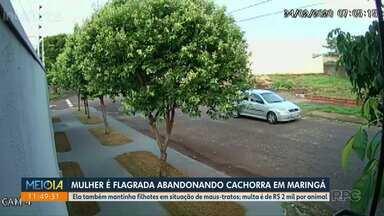 Mulher é flagrada abandonando cachorra em Maringá - Câmera de vigilância registrou a ação.
