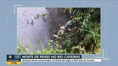 Peixes aparecem mortos no rio Caveiras na Serra catarinense - Peixes aparecem mortos no rio Caveiras na Serra catarinense