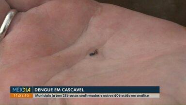 Casos de dengue dobra em Cascavel - Município já tem 286 casos confirmados e outros 606 estão em análise.