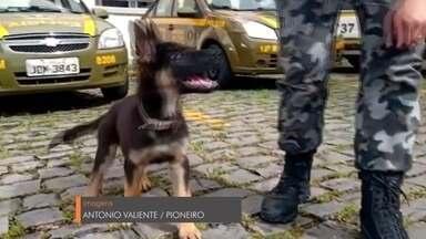 Canil da Brigada Militar tem novo integrante em Caxias do Sul - O cãozinho Quíron passará por treinamento durante dois anos, antes de iniciar o trabalho nas ruas.