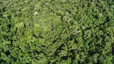 Ministério Público Estadual é contra a reabertura da estrada do Colono - O documento foi enviado à Câmara dos deputados.