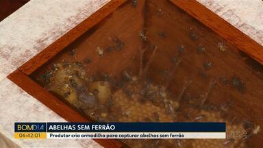 Produtor cria armadilha para capturar abelhas sem ferrão - A criação de abelhas se tornou um hobby para alguns moradores de Cascavel.