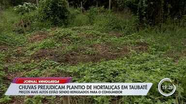 Chuva prejudica produção de hortaliças em Taubaté - Veja reportagem.