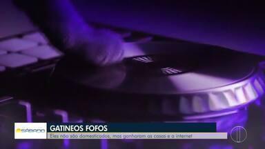 Veja a íntegra do Bom Dia Sábado, 14/03/2020 - Bom Dia Sábado é comandado pelo apresentador Ádison Ramos.