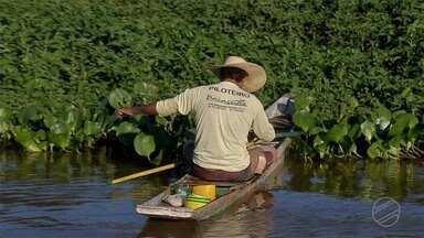 Temporada de pesca começa com profissionais apontando falta de peixe no rio Paraguai - Temporada de pesca começa com profissionais apontando falta de peixe no rio Paraguai