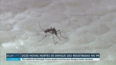 Paraná registra 12 novas mortes por dengue - Relatório foi publicado nesta terça-feira (17).