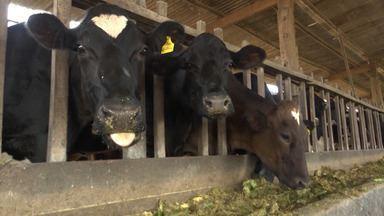 Criadores de gado leiteiro se encontram em Vitória da Conquista para trocar conhecimentos - No evento, os produtores receberam orientações de como ampliar a produção e o lucro.