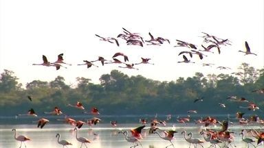 Chaco paraguaio guarda diversidade de espécies de animais e vegetação - Território é dividido em duas partes: o chapo seco, com paisagem árida, onde as temperaturas são extremas, e o chaco úmido, com lagoas salgadas e muitas aves.