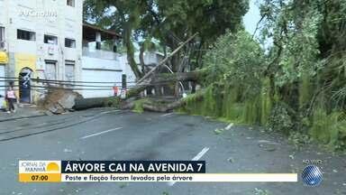 Queda de árvore causa mudanças no trânsito na Avenida Sete, na região do Campo Grande - Poste de energia elétrica e fios foram atingidos pelos galhos. Ninguém ficou ferido.