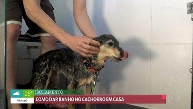 Alexandre Rossi dá dicas para dar banho nos cachorros em casa - Com o isolamento social, os donos de cachorros têm evitado levar os animais para tomar banho nas petshops