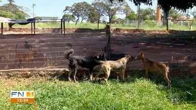Quarentena aumenta número cães abandonados no Oeste Paulista - Animais contam com ajuda de voluntários.