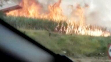 """Queimada atinge área rural de Lençóis Paulista e mobiliza bombeiros - Uma queimada atingiu uma área rural em Lençóis Paulista (SP) nesta quarta-feira (29). Segundo o Corpo de Bombeiros, o fogo atingiu a região conhecida como """"Corvo Branco""""."""