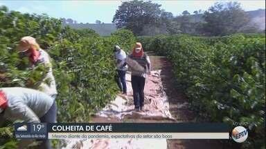 Colheita do café no Sul de MG começa com boas expectativas - Mesmo diante de pandemia, cenário é otimista