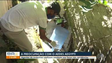 Grande proliferação de mosquitos preocupa moradores de Prado, no sul da Bahia - O Aedes Aegypti é o inseto que transmite doenças como Dengue e Chikungunya.