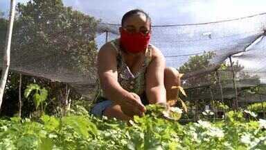 Mães que tiram da terra o sustento para os filhos - Mães que tiram da terra o sustento para os filhos