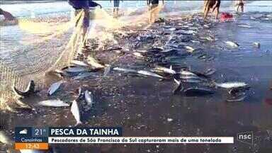 Pescadores de São Francisco do Sul capturam mais de uma tonelada de tainha - Pescadores de São Francisco do Sul capturam mais de uma tonelada de tainha