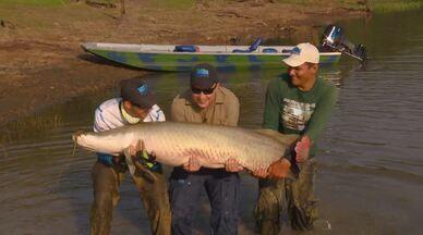 Equipe do Terra da Gente se aventura em pescaria em Manaus em busca de pirarucus - Aventureiros vão atrás do maior peixe de escamas de água doce do mundo.