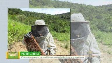 Consumo e venda de mel batem recorde durante a quarentena - Paty do Alferes lidera a produção no estado do Rio.