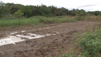 Veja os reflexos da cheia do rio São Francisco na colheita da mandioca na Bahia - Confira.