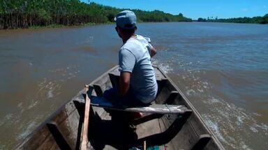 Pescadores de Ilha Grande, no litoral do Piauí, usam internet para vender produção - Pescadores de Ilha Grande, no litoral do Piauí, usam internet para vender produção