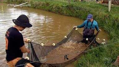 Morador de Pirenópolis aposta na criação de peixes para gerar renda - Morador de Pirenópolis aposta na criação de peixes para gerar renda