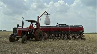 Dólar alto favorece venda de grãos, mas preoucupa produtores que precisam comprar insumos - Embrapa diz que sementes, defensivos e fertilizantes representam 42% dos gastos dos agricultores em Mato Grosso do Sul.