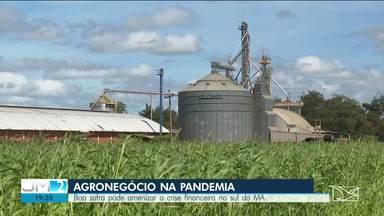 Boa safra pode amenizar a crise financeira no sul do Maranhão - O agronegócio é o único setor da economia brasileira que não encolheu com durante a pandemia da Covid-19.