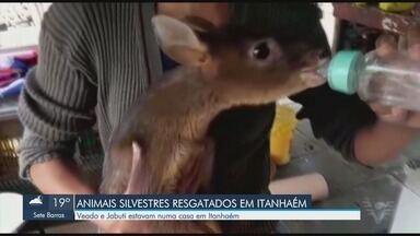 Polícia Ambiental resgata cervo e jabuti em Itanhaém - Os animais estavam em cativeiro em uma casa na cidade.
