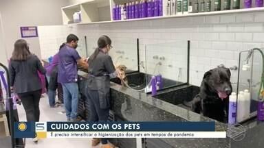 Especialista diz que é preciso intensificar a higienização dos pets em tempos de pandemia - Especialista orienta que é preciso intensificar a higienização dos pets em tempos de pandemia