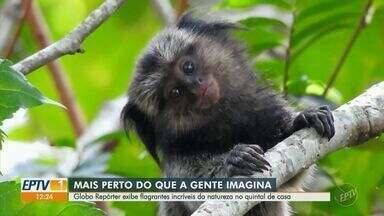 Confira os bastidores do Globo Repórter desta sexta-feira gravado em Valinhos - O programa irá exibir flagrantes incríveis da natureza vistos no quintal de casa.
