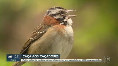Polícia ambiental de Campinas combate caça de pássaros e resgata 2,6 mil aves em 2019 - Veja o trabalho feito pela polícia para combater essa prática.