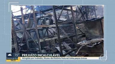 Museu de História Natural da UFMG tinha peças únicas no mundo - Boa parte do acervo foi destruída no incêndio dessa segunda-feira (15). Mais de 265 mil itens fazem parte do museu.