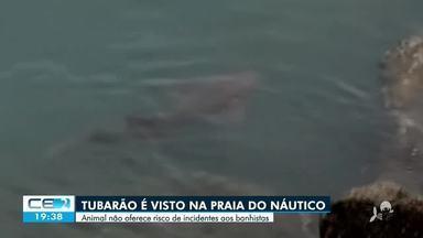 Tubarão é visto na orla de Fortaleza - Saiba mais em g1.com.br/ce