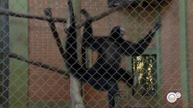 Zoológico de Bauru promove curso de férias online para crianças e jovens - A equipe do Zoológico de Bauru (SP) vai realizar a partir desta quarta-feira (1º) um curso de férias online e gratuito com atividades educativas para crianças e adolescentes.