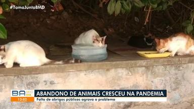 Número de animais abandonados em Salvador aumenta após pandemia - Voluntários que cuidam dos bichos estão com dificuldade para manter as atividades, porque as doações também diminuíram.
