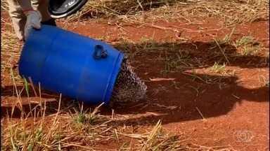 Moradores de Jataí encontram ouriço no quintal de casa - Animal foi visto na goiabeira da casa.