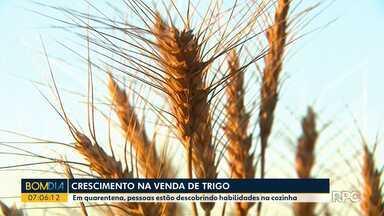 Consumo de trigo aumenta durante o isolamento social - Muitas pessoas estão aproveitando o tempo para fazer pães e outras receitas.