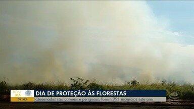 Primeiro semestre tem quase mil ocorrências de queimadas - Nesta sexta-feira (17) é lembrado o Dia de Proteção às Florestas.