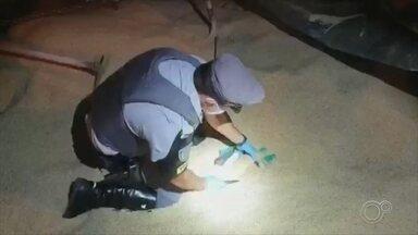 Polícia apreende cerca de uma tonelada de maconha em rodovia de Angatuba - Cerca de uma tonelada de maconha foi apreendida na noite de segunda-feira (20), na Rodovia Raposo Tavares, em Angatuba (SP). A droga foi encontrada no meio da carga de arroz.
