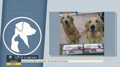 Animais precisam de doação de sangue - Médica veterinária explica como os animais podem doar sangue.
