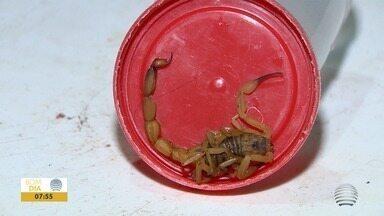 Prudente tem mais de 450 ocorrências com escorpiões em 2020 - Cuidados devem ser tomados em qualquer época do ano.