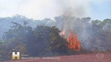 Incêndio no Pantanal já atinge regiões turísticas - Estrada Parque, em Corumbá - MS, sofre com chamas