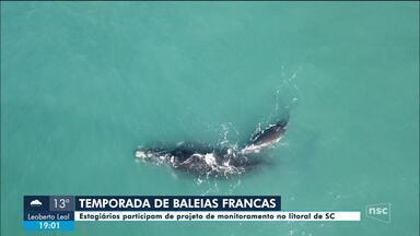Estudantes de biologia vão ter oportunidade de estudar baleias no litoral de SC - Estudantes de biologia vão ter oportunidade de estudar baleias no litoral de SC