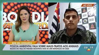 Polícia investiga morte de 34 gatos em Cachoeira Paulista - Veja como denunciar situação de maus tratos a animais