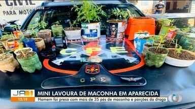 Polícia encontra mini lavoura de maconha em Aparecida de Goiânia - Homem foi preso pela PM.