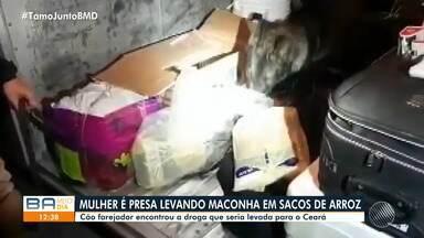 Mulher é presa transportando maconha em sacos de arroz; confira - Cão farejador encontrou a droga que seria levada para o Ceará.