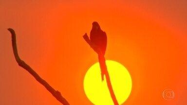 'A gente viu bicho morrendo', relata bióloga sobre fogo no Pantanal brasileiro - O fogo que consome o Pantanal está ameaçando um dos maiores abrigos de araras-azuis do país. A bióloga Luciana Pinheiro, que monitora as aves, acompanhou a equipe do Jornal Nacional.