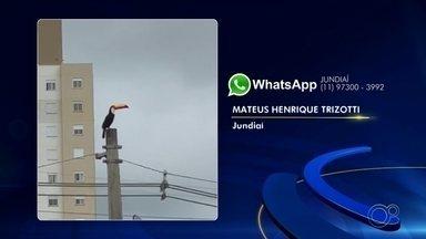 Moradores registram imagens de aves na região de Sorocaba - Os moradores da região de Sorocaba (SP) enviaram para a TV TEM fotos de aves como maritacas, gaviões e tucanos nesta quarta-feira (19).