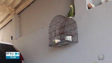 Justiça restabelece guarda de papagaio à família de Presidente Prudente - Juiz determinou que a ave volte para casa no prazo de 48 horas.