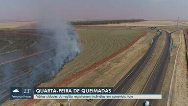 Região de Ribeirão Preto enfrenta estiagem com incêndios em canaviais - Em Sales Oliveira, SP, e em Brodowski, SP, rodovias foram fechadas após serem invadidas pela fumaça.